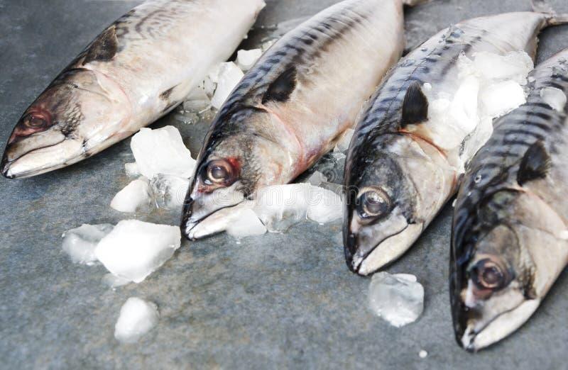 Zbliżenie makrele na szarości powierzchni Pojęcie rynku i ryby sprzedawanie obraz royalty free
