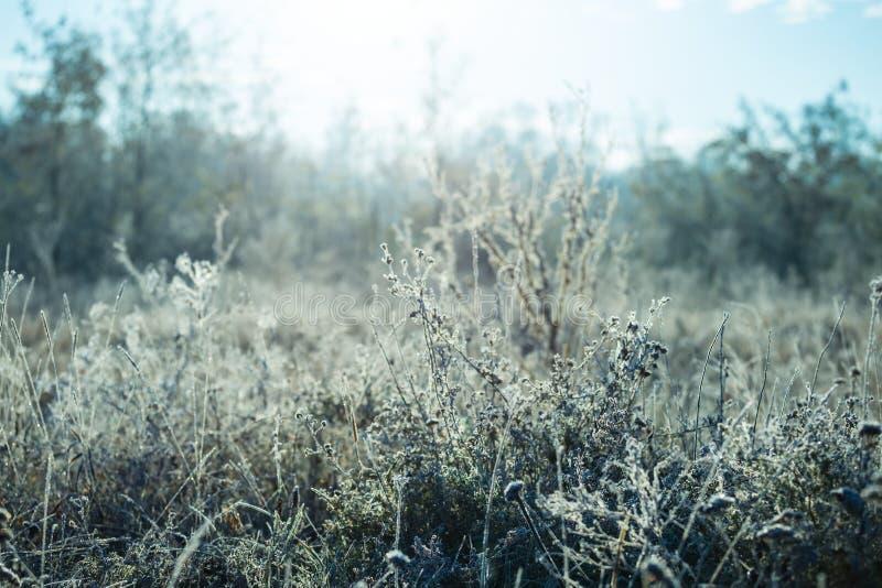 Zbliżenie marznąca preryjna trawa przy wczesnym porankiem obraz royalty free