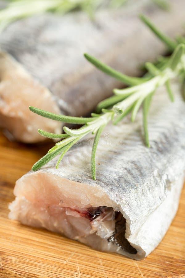 Zbliżenie morszczuka makro- świeża surowa ryba z rozmarynami rozgałęzia się na drewnianej desce zdjęcie stock