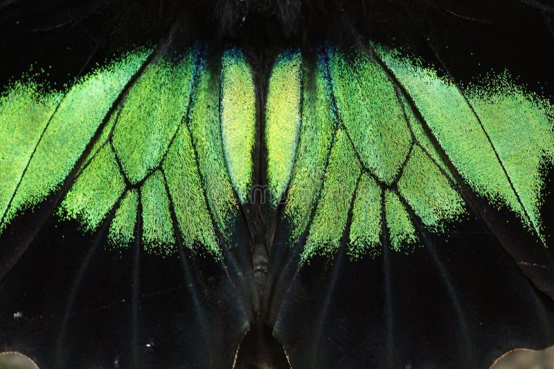zbliżenie motylia skala obraz royalty free
