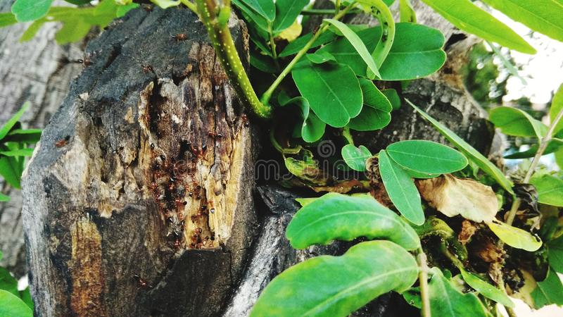 zbliżenie mrówki zdjęcia stock