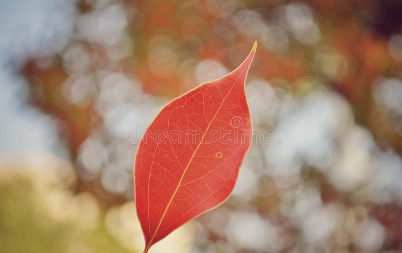 Zbliżenie na pięknym jesień liściu obrazy stock