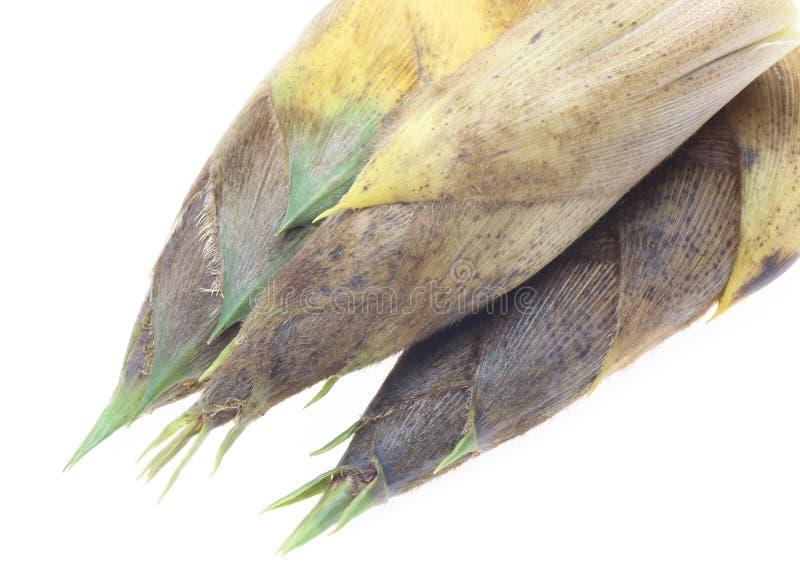 Zbliżenie obrazka oof bambusowy krótkopęd obrazy stock