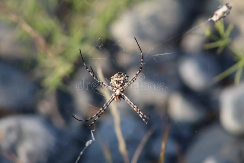 Zbliżenie pająka owadów obrazy royalty free