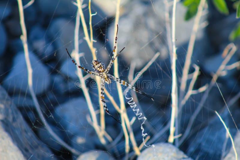 Zbliżenie pająka owadów obrazy stock