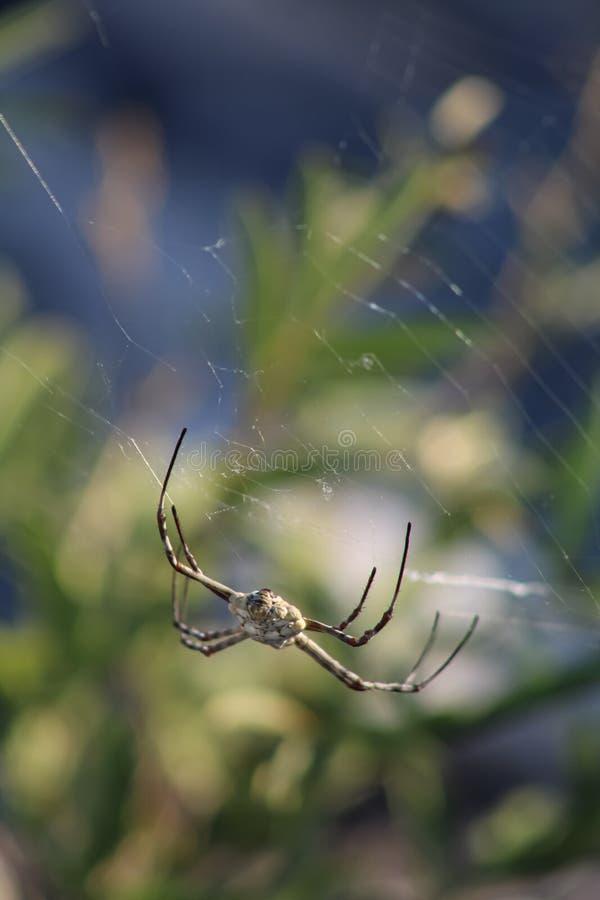 Zbliżenie pająka owadów obraz royalty free