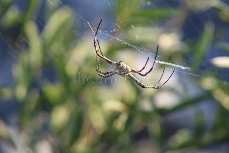 Zbliżenie pająka owadów zdjęcia stock