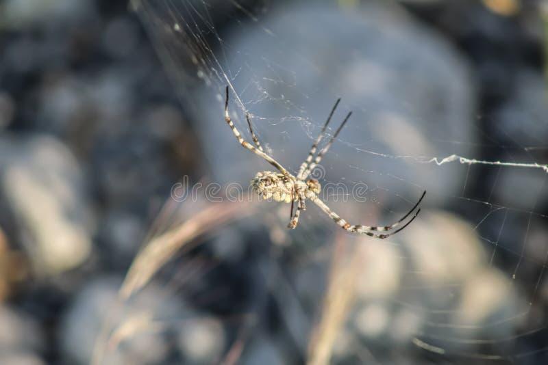 Zbliżenie pająka owadów zdjęcie stock