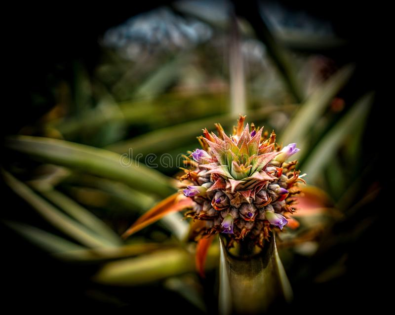 Zbliżenie piękna tropikalna egzotyczna roślina w polu zdjęcia stock