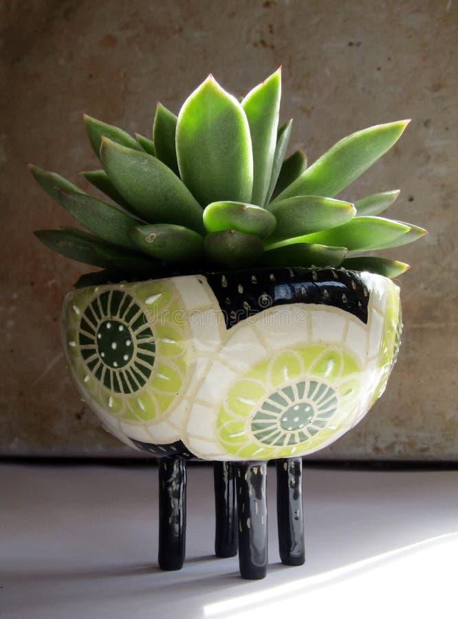 Zbliżenie pięknie projektujący ceramiczny garnek z dosyć małą zieloną rośliną w nim fotografia royalty free