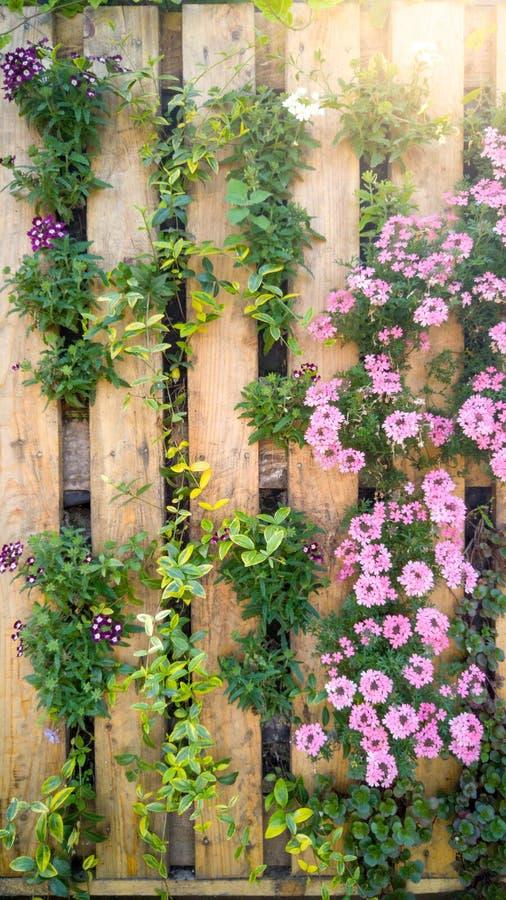 Zbliżenie piękny wizerunek kwiaty grwoing przez drewnianej deski na dekoracyjnej ścianie Kreatywnie kwiatu łóżko w miastowym ogró obraz royalty free