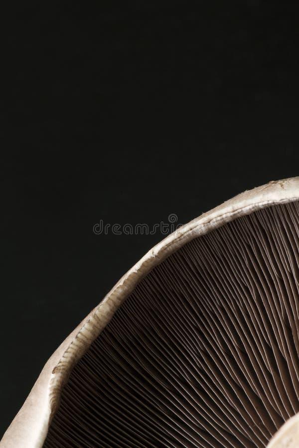 Zbliżenie Portobello pieczarka zdjęcie royalty free