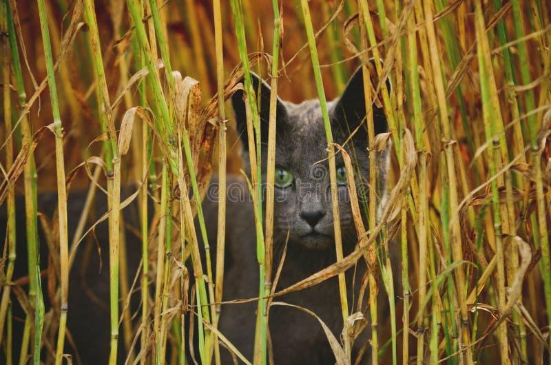 Zbliżenie portret twarz piękny młody gniewny przyglądający kot cześć zdjęcie stock