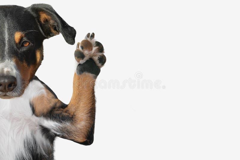 Zbliżenie psia ` s łapa podnosi up z pokojem dla teksta zdjęcia royalty free