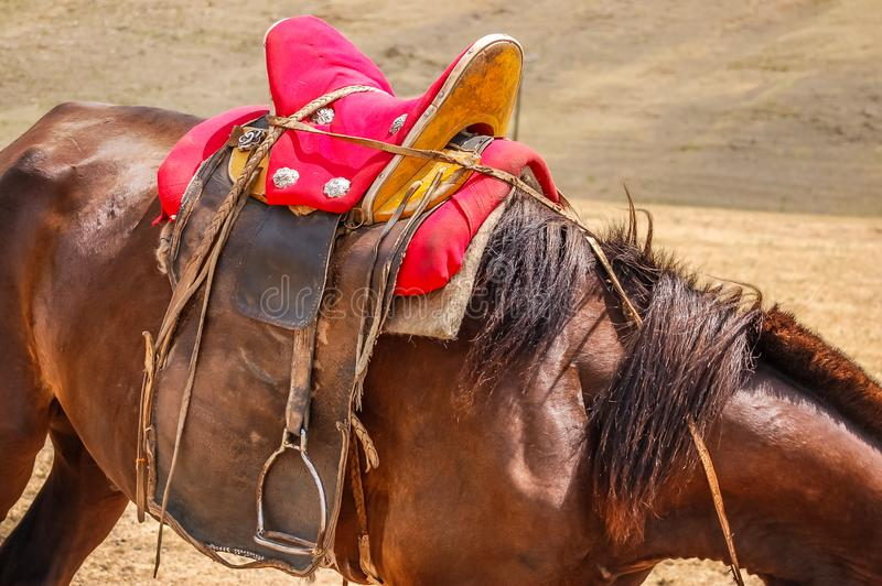Zbliżenie siodłający koń w Mongolia zdjęcie stock