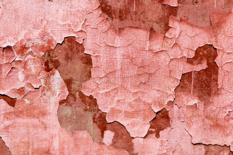 Zbliżenie stary koral malująca obieranie tekstura obraz royalty free