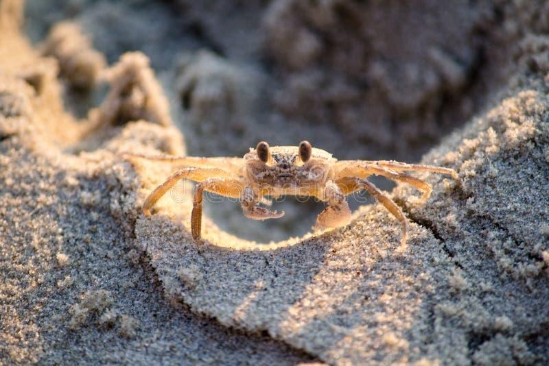 Zbliżenie strzał denny krab na skałach zdjęcia royalty free