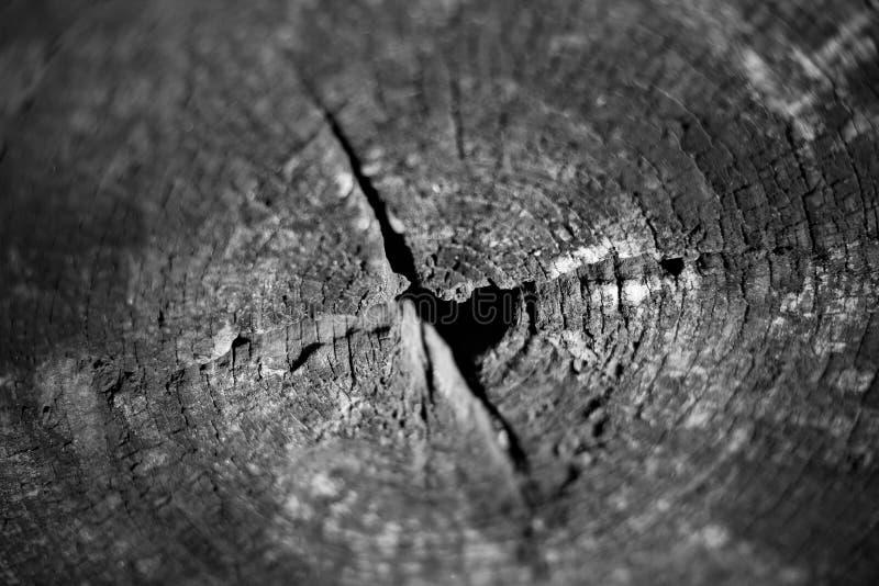 Zbliżenie strzał naturalnego drewna rżnięta bruzda, drzewny pierścionek z płytką ciętości ostrością w czarny i biały brzmieniu fotografia stock