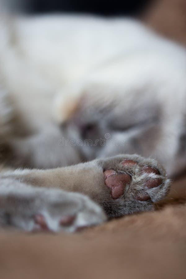 Zbliżenie strzelał kota ` s łapa obrazy stock