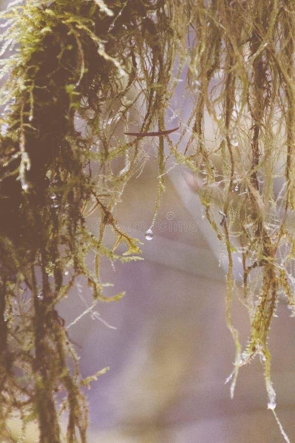 Zbliżenie strzelający wierzbowy drzewo zdjęcia royalty free