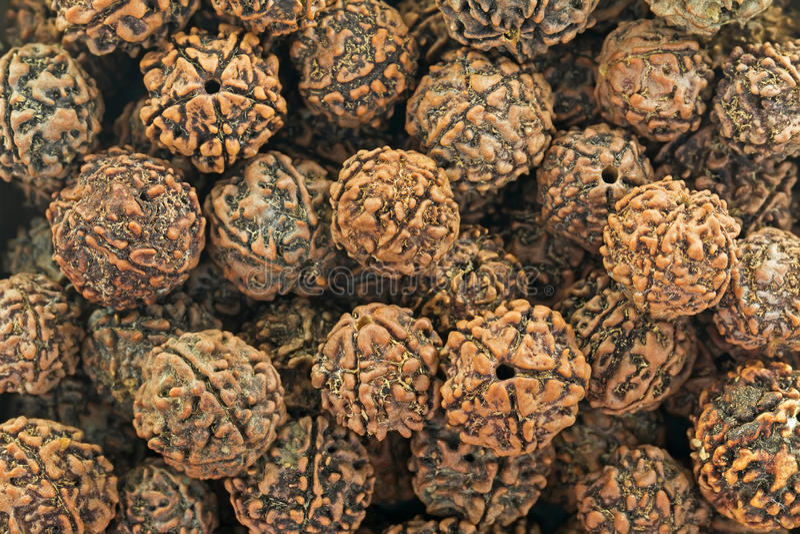 Zbliżenie tekstura Rudraksha okaleczał ziarna używać jako modlitewni koraliki fotografia royalty free