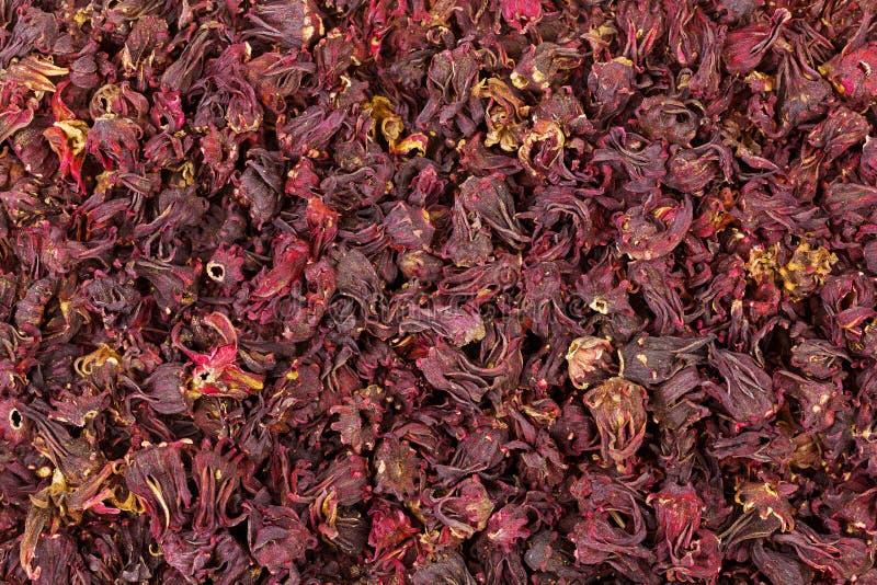 Zbliżenie tekstura wysuszony Roselle poślubnik kwitnie w zmroku - czerwień co fotografia royalty free