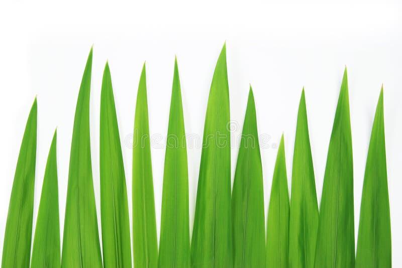 zbliżenie trawy. obrazy stock