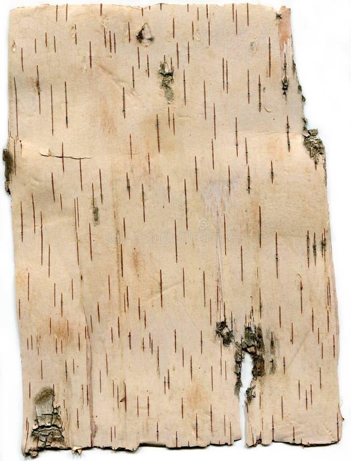 Zbliżenie wzorka tekstury z kory brzozowej białej zdjęcie stock