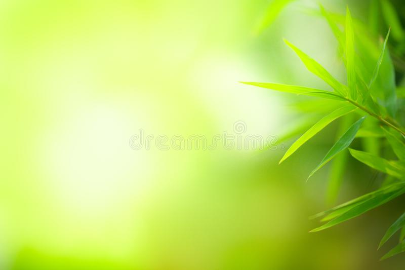 Zbliżenie zielony bambus opuszcza tło obraz royalty free