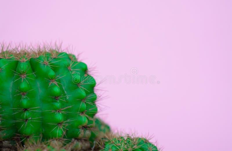 Zbliżenie zielony kaktus na różowym tle mody wzoru lampasa miastowy wektor Galeria Sztuki Minimalna fotografia stock