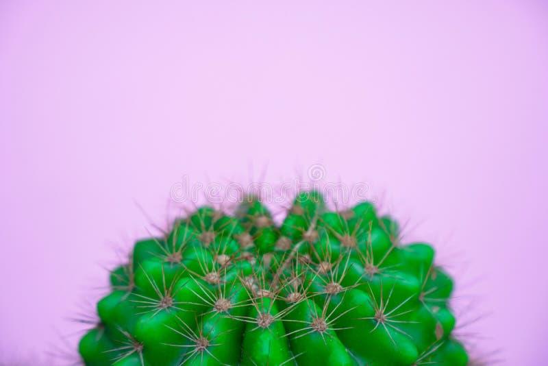 Zbliżenie zielony kaktus na różowym tle mody wzoru lampasa miastowy wektor Galeria Sztuki Minimalna obraz stock