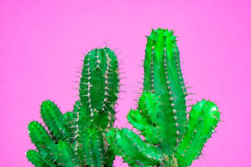 Zbliżenie zielony kaktus na różowym tle mody wzoru lampasa miastowy wektor Galeria Sztuki Minimalna obrazy royalty free