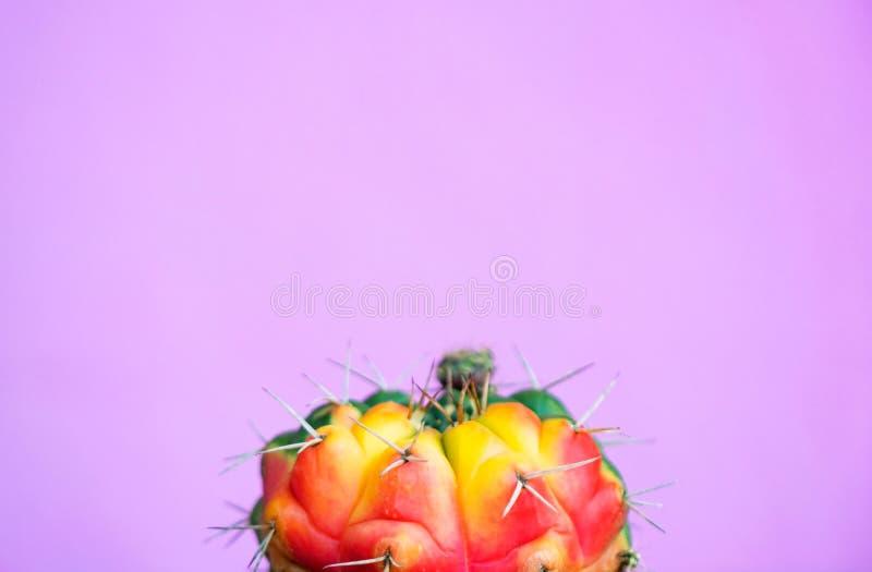 Zbliżenie zielony kaktus na różowym tle mody wzoru lampasa miastowy wektor Galeria Sztuki Minimalna obrazy stock