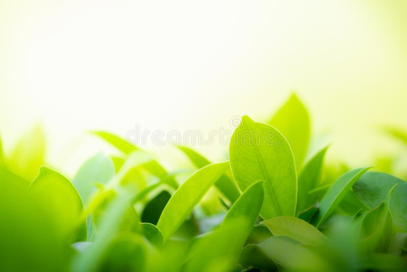 Zbliżenie zielony liść na rozmytym bokeh tle dla naturalnej i świeżości tapety zdjęcia royalty free