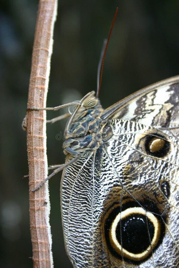 Download Zbliżenie motyla zdjęcie stock. Obraz złożonej z skóra - 144324