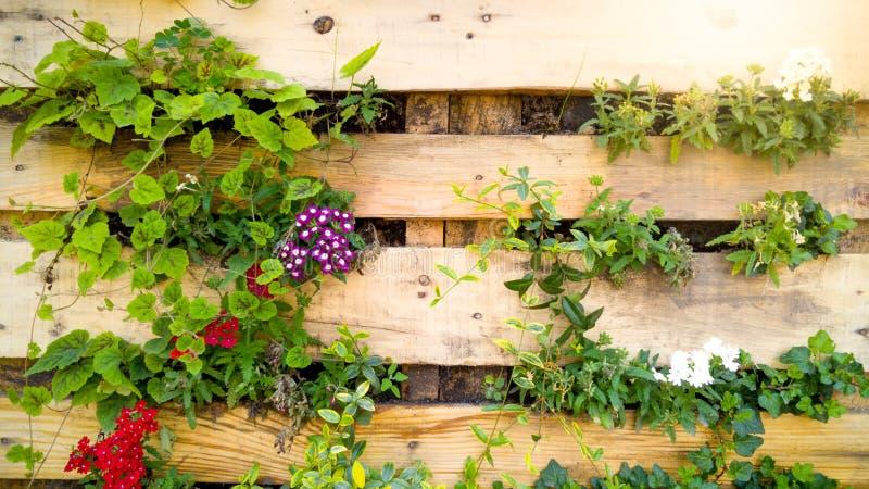 Zbli?enie pi?kny wizerunek kwiaty grwoing przez drewnianej deski na dekoracyjnej ?cianie Kreatywnie kwiatu ? fotografia stock