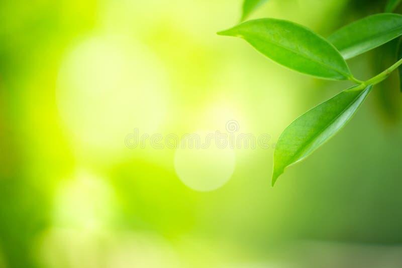 Zbli?enie widok zielony li?? z pi?kna bokeh pod ?wiat?em s?onecznym zdjęcia stock