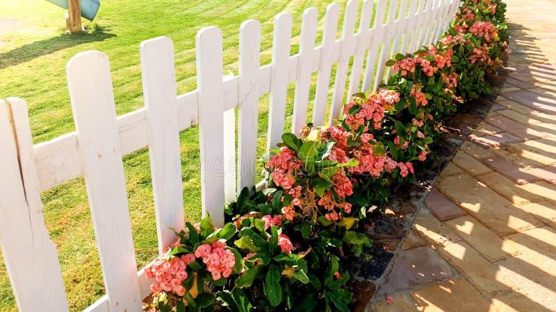 Zbli?enie wizerunek pi?kny bia?y drewniany ogrodzenie i flowerbed przy ogr?dem obraz stock