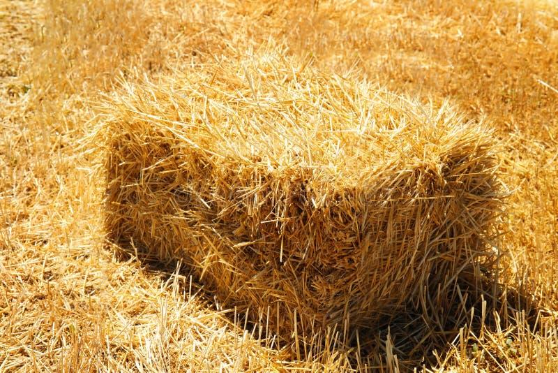 Zboża siana bela w polu na słonecznym dniu fotografia royalty free