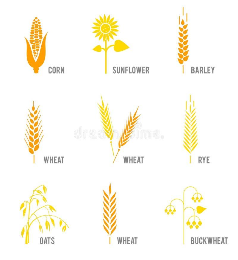 Zboże ikony ustawiać z ryż, banatka, kukurudza, owsy, żyto, jęczmień, słonecznik, gryka ilustracji