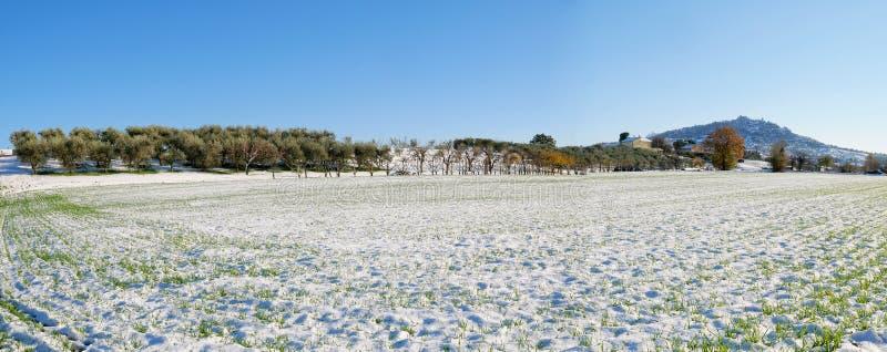 Zbożowy pole w zimie obrazy stock