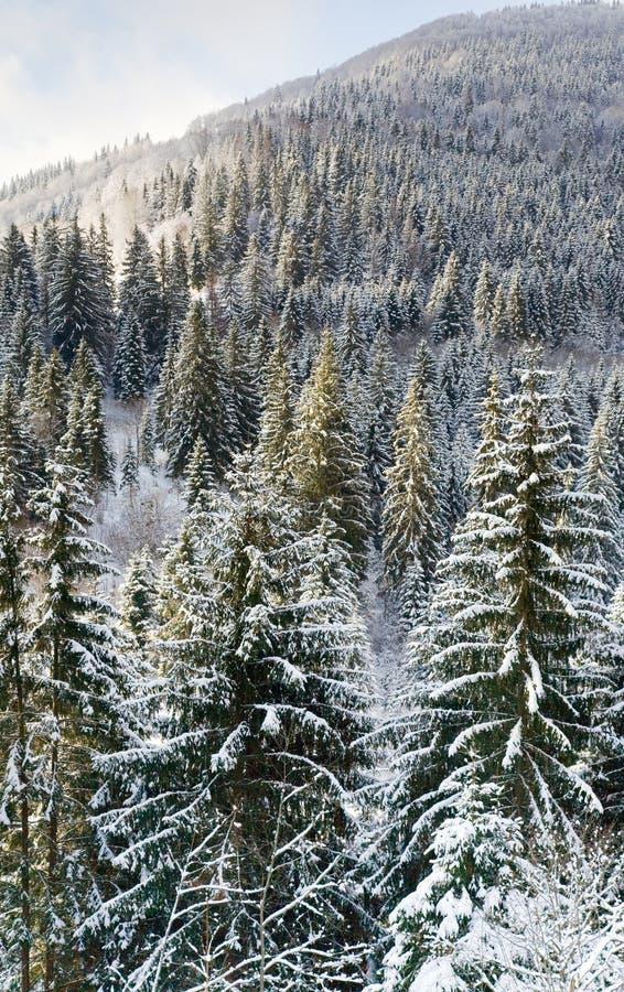 zbocze góry lasowa zima fotografia royalty free
