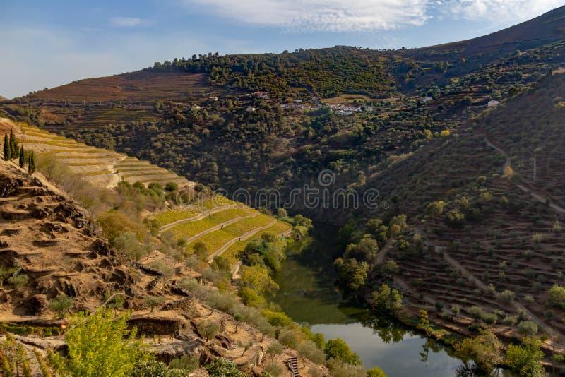 Zbocze winnica w Douro Rzecznym regionie, Portugalia obrazy royalty free