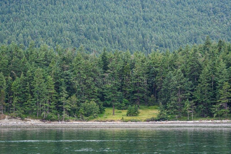 Zbocze zakrywający w wiecznozielonych drzewach nad skalisty brzeg z otwartym zielonym trawiastym terenem, jako tło, San Juan wysp obraz stock