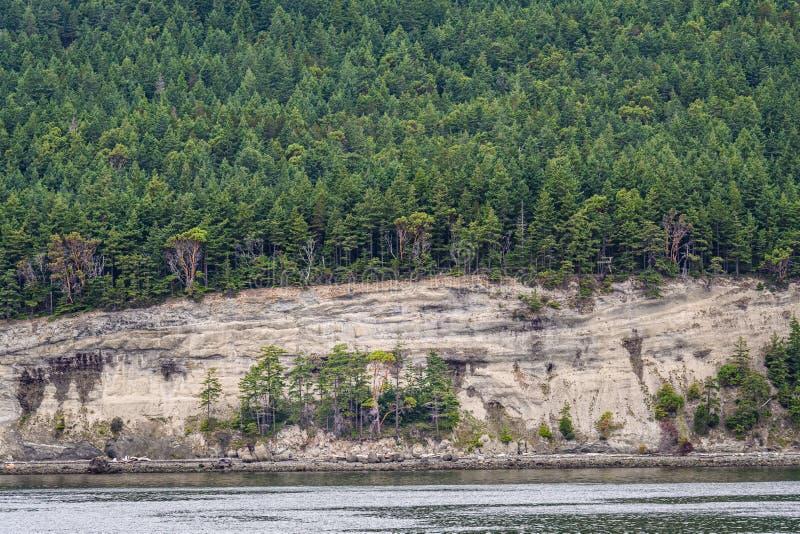 Zbocze zakrywający w wiecznozielonych, madrone drzewach nad skalisty brzeg z i, jako tło, San Juan Isl obraz stock