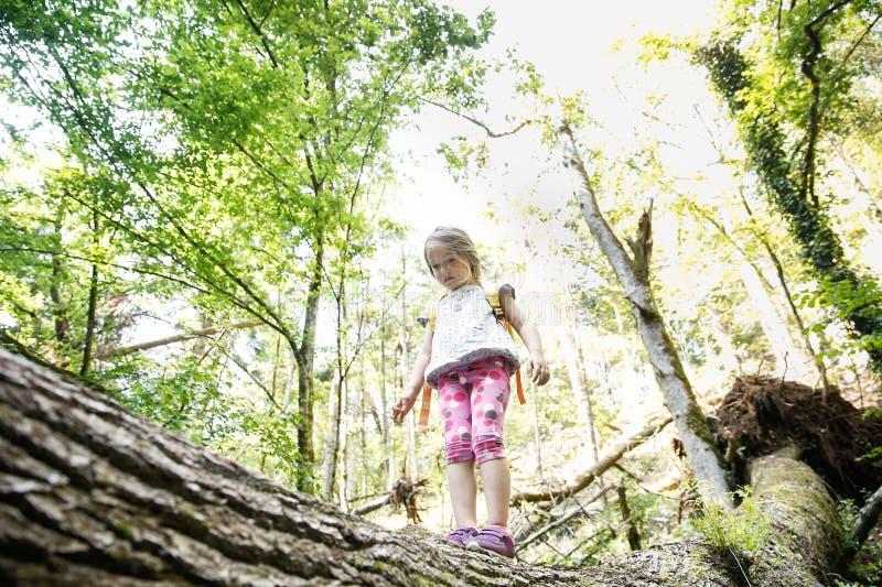 Zdecydowana mała dziewczynka harcerza pozycja na nazwie użytkownika drewna obraz royalty free