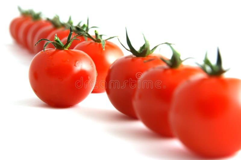 Zdecydowanie pomidor zdjęcie stock