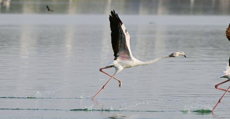Zdejmuje ptak _ fotografia stock