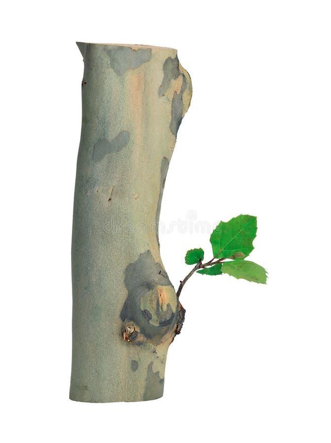 zdjęcie roślin ilustracji