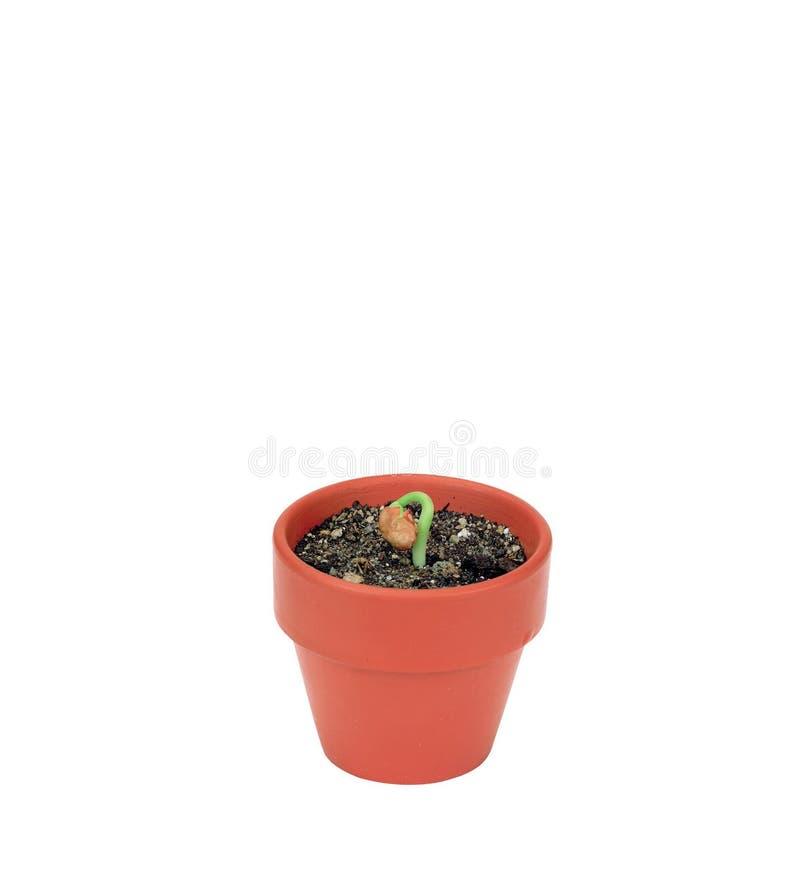 zdjęcie roślin fotografia royalty free